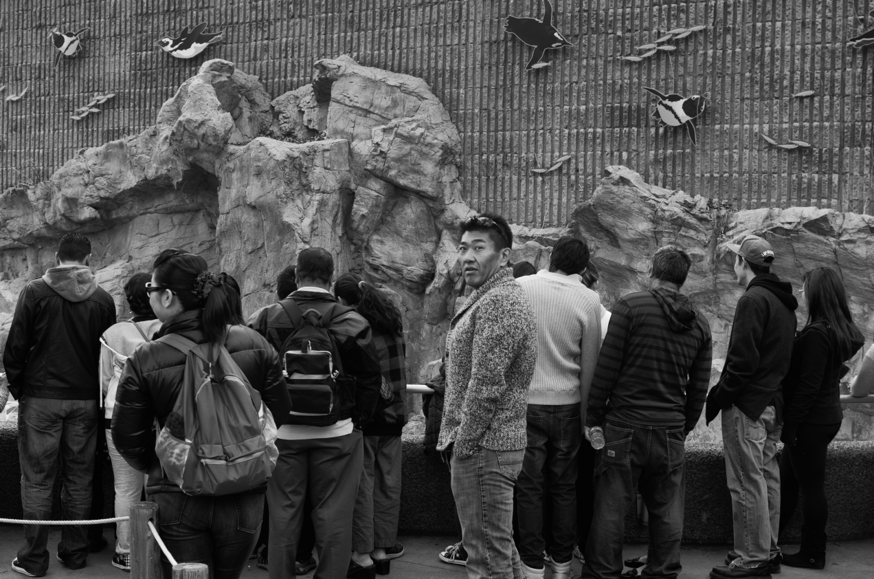 Denver Street Photography | The Denver Zoo