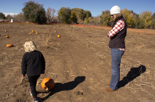 pumpkin_patch_h-3