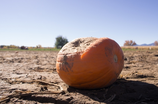 pumpkin_patch_h-4