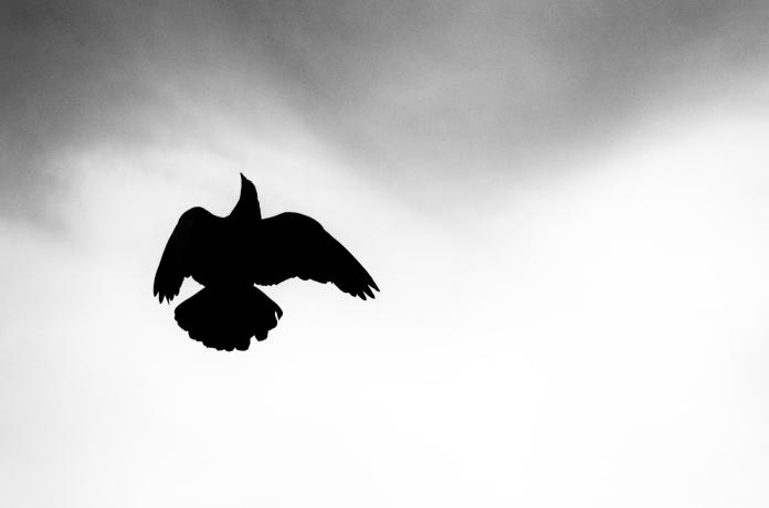 bird_s